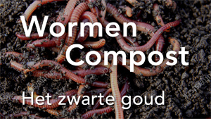 300wormcompost