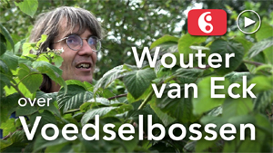 300wouter